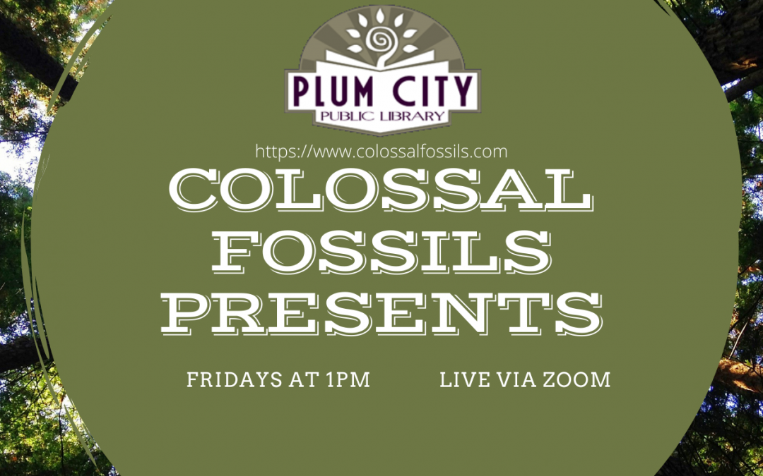 Colossal Fossils presents…The Age of Humans